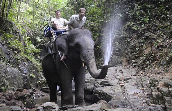 freaky finance, freaky travel, Thailand, Elefantenreiten, Freunde, Dschungel