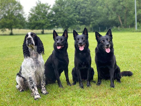 v.l.n.r. Paula (Hund einer Freundin), Ivy, Apple und Kaja