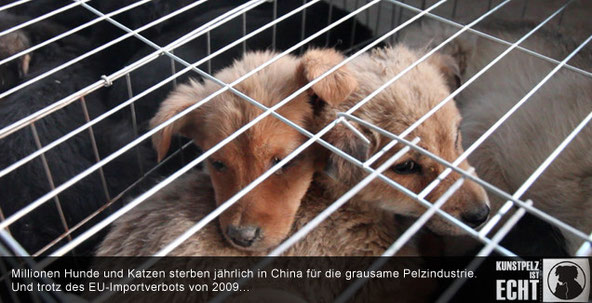 Sandy P.Peng Tierschutz Tierrechtsaktivistin Pengshop Anti-Pelz Kampagne No Fur Fashion Fight for Animal Rights Tattoo Model Pelzindustrie Animals Liberty Anti-Pelz Kampagne Animals United No Fur Fashion Sandyppeng Kragen Pelzkragen Kunstpelz
