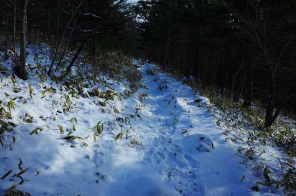 アポイ岳 登山道