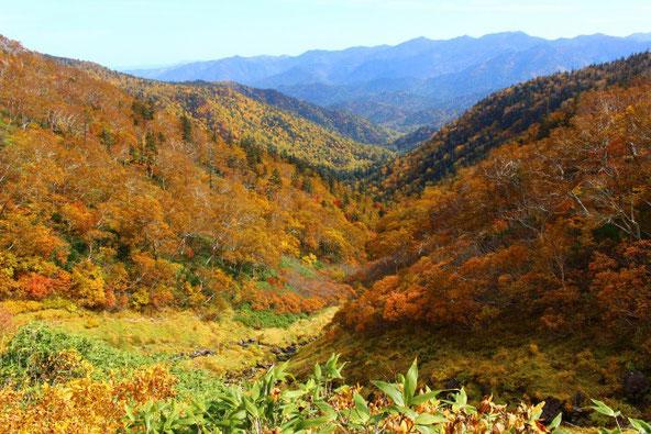 平山の黄葉