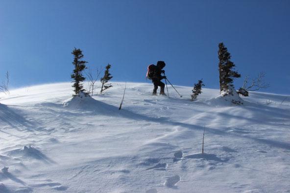 ユニ石狩岳主稜線からの下り