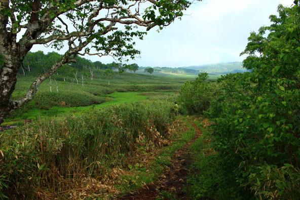 雨竜沼湿原登山道