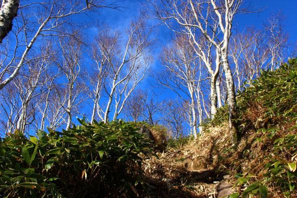 風不死岳への登山道