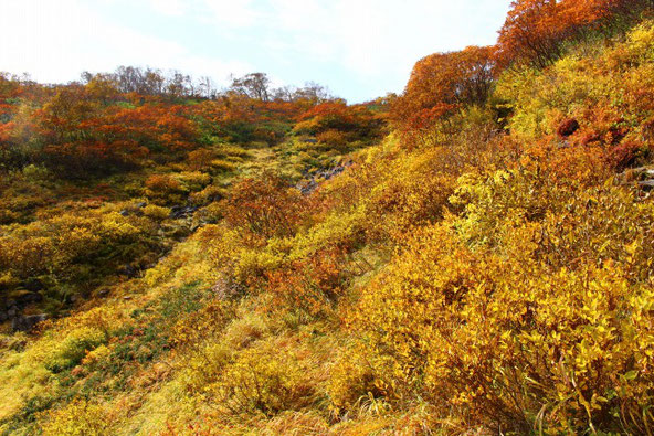 平山登山道の黄葉