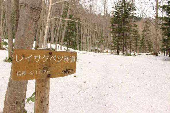 レイクサベツ林道 下ホロカメットク山