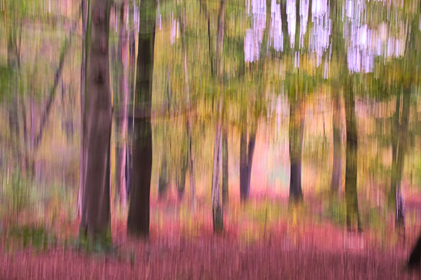 Fotokunst , Acryl Alu Dibond , Gallery-Bond Fineart, Foto , Fotografie , Fotokunst , arthaus kempen , Kunst , Künstler , Günter Heimbucher