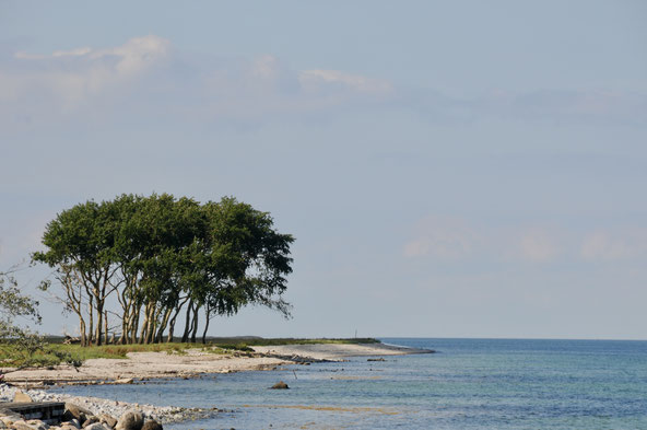 Die weithin sichtbare Baumgruppe am Eingang der Schlei