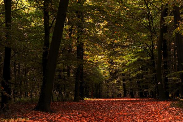 Herbst, Herbstwald, Viersen, Süchteln, Süchtelner Höhen, Kempen, Günter, Heimbucher, Günter Heimbucher