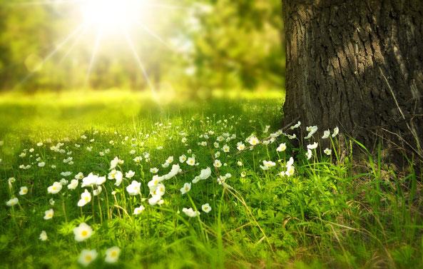 Still sitzen, nichts tun, der Frühling kommt, das Gras wächst.