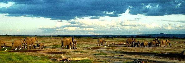 Parchi Nazionali e Riserve del Kenya