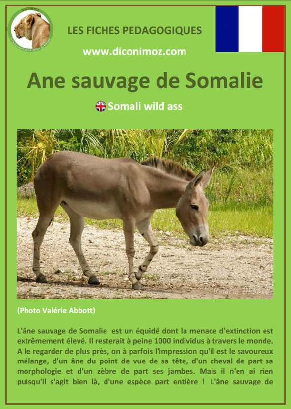 fiche animaux pdf download ane sauvage somalie imprimer