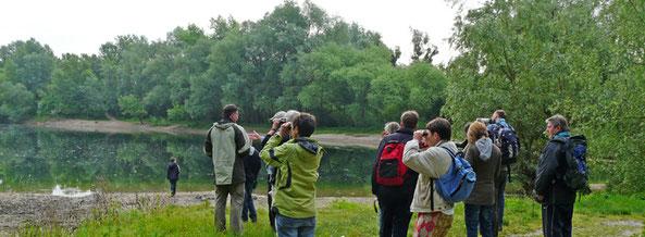 Vogelexkursion in den Rheinauen, Foto: A. Treffer