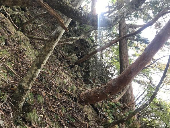 奥駈道中の急斜面