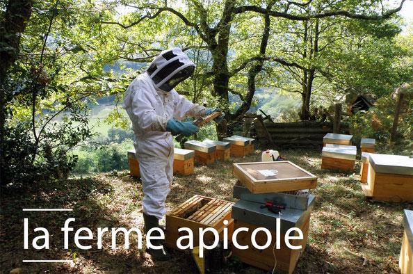 Ferme apicole - Miel biologique Saint-Martin-d'Arrossa