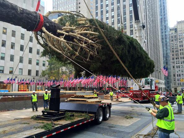 Der Weihnachtsbaum kommt angeflogen...