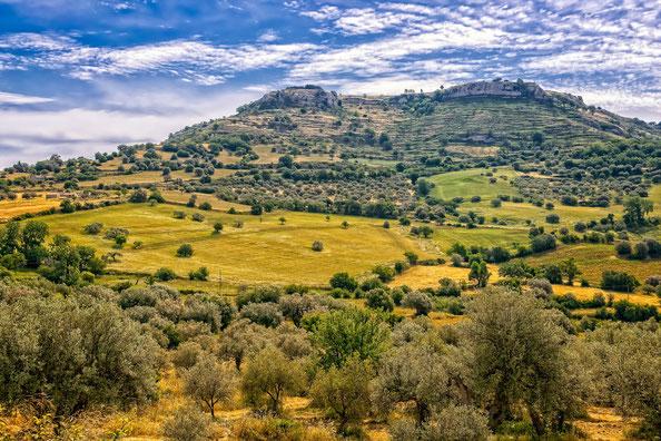 Olivenbäume in Sizilien