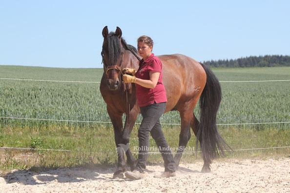 Freiarbeit, Bodenarbeit, Horsemanship