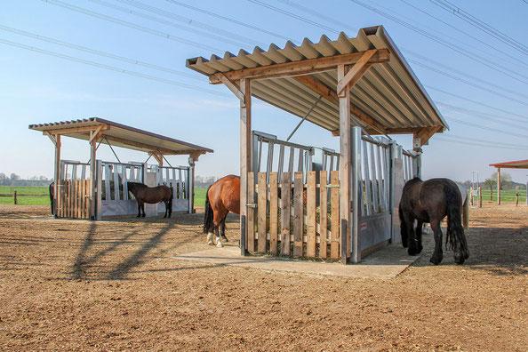 Pferde an den Heuraufen im Aktivstall