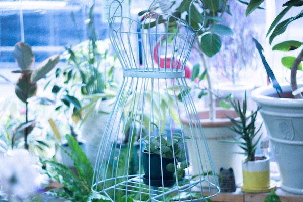 練馬桜台ガーデニングショップかのはの トルソー型の花台をメインにシェフレラ、ストレチア・ユンケア、 アスプレニウム、 コブラシダ、 フィッカス・ベンガレンシス、パンダガジュマル、サンスベリア・ミカド、サンスベリア・マッソニアナ、パキラなどの観葉植物、ポルトガル・イタリア・イギリス・日本製などの植木鉢 、ガーデンマスコットのフラミンゴ・柴犬・シーズー・シュナウザー・フクロウなどが可愛らしく置いてあります