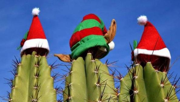 Weihnachten-Christmas-Karibik-Urlaub-Curacao-Ferienhaus-Pool