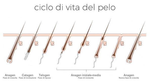 depilis epilazione laser ciclo di vita del pelo