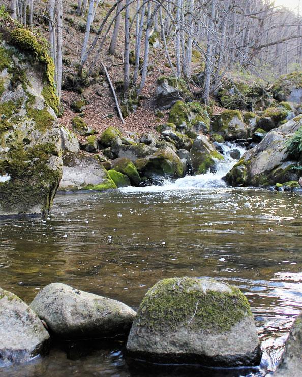 Au printemps la pêche à la truite dans une rivière encore froide, dévêtue de son manteau de feuillages