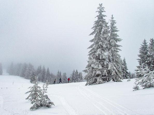 Auch wenn die Sicht ziemlich neblig war, erkannten wir die imposanten Tannen des Schwarzwaldes gut.