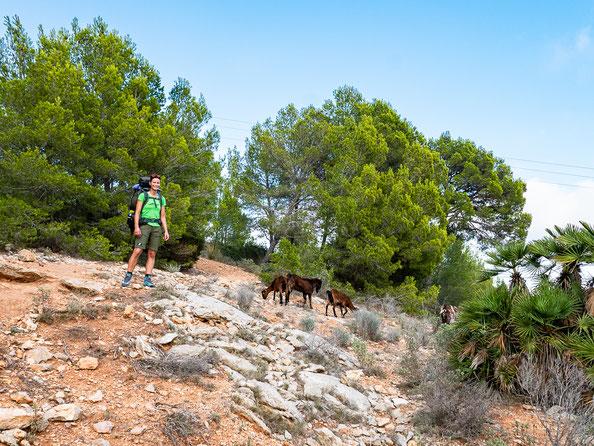 Wanderung GR 221 auf Mallorca - Etappe 1 von Port d'Andratx nach Sant Elm