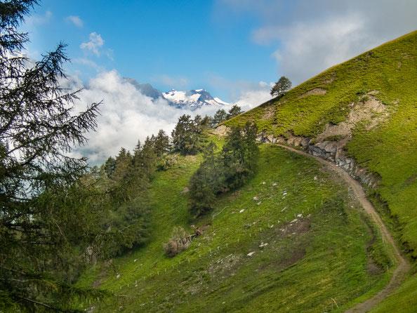 Hier geht es weiter zu Steineralm. Wir zweigen jedoch rechts ab und gehen den Wiesenhang nach oben.