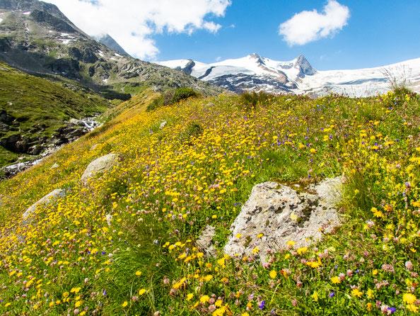 Was für ein Kontrast - bunte Blumen im Vordergrund und karge Gletscher im Hintergrund