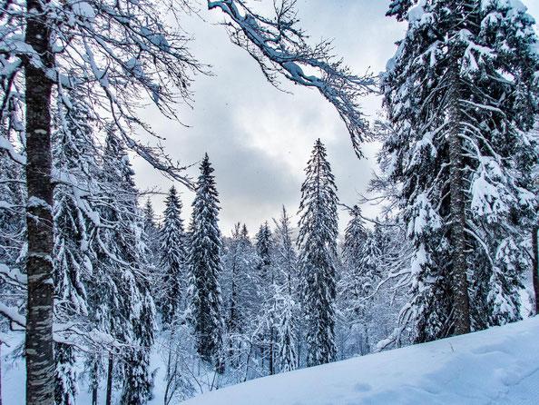Die Nadelbäume hängen voll mit ganz viel weißem Schnee.