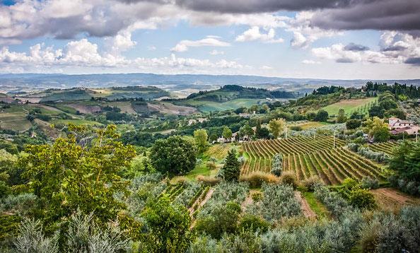 Trüffelreise Toskana- Eines der hervorragendsten Trüffelgebiete bekannt, besonders die Region bei Montaione, der Crete senesi,  San Miniato und Mugello