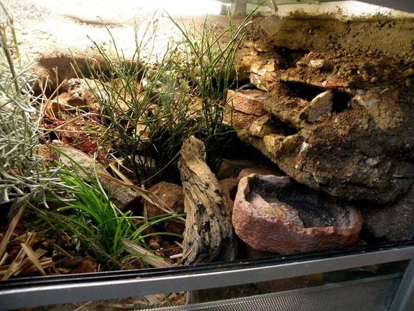 Abwechslungsreiche Einrichtung für die Geckos Foto: E. Laue