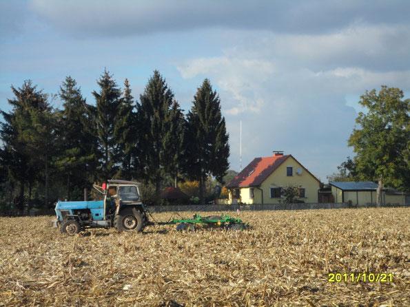 Maisland Scheiben 2011