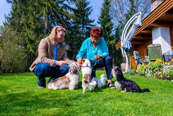 Hund für ältere Menschen bluebello