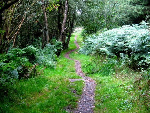 Waldweg - gehe deinen Herzensweg