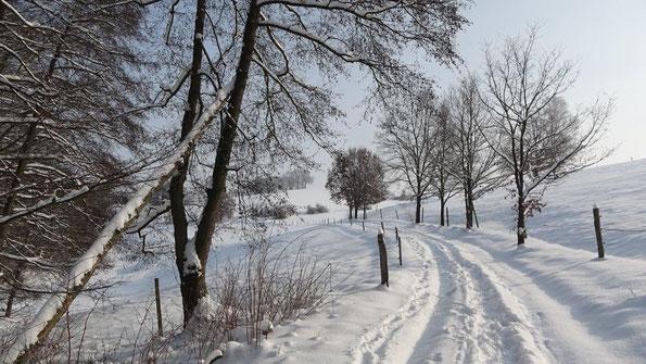 Weg bei Friesen, ein Wintertraum trotz -13°C, 10.02.2021 ( Foto: W. Roth )