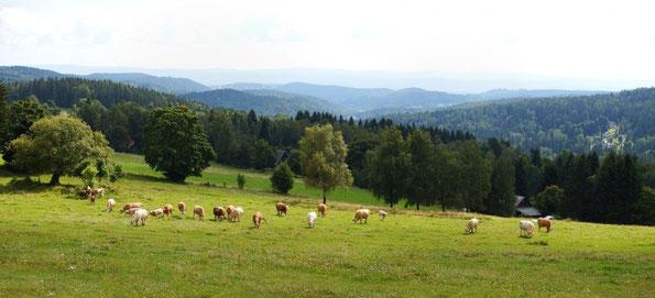 Panorama vom Havravi vrch 841m (Rabenberg)