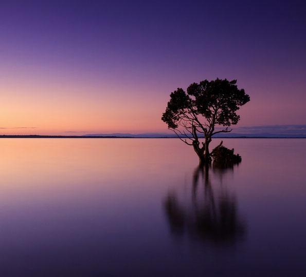 Sonnenaufgang mit einem Baum in einem violetten See