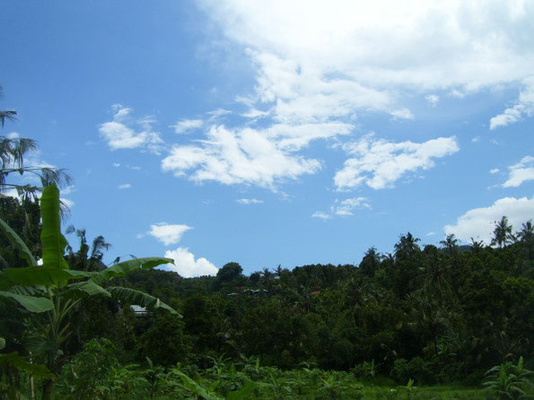 Landschaft mit tropischen Pflanzen unter blau- weißem Himmel