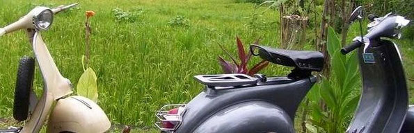 two vespas near a ricefield