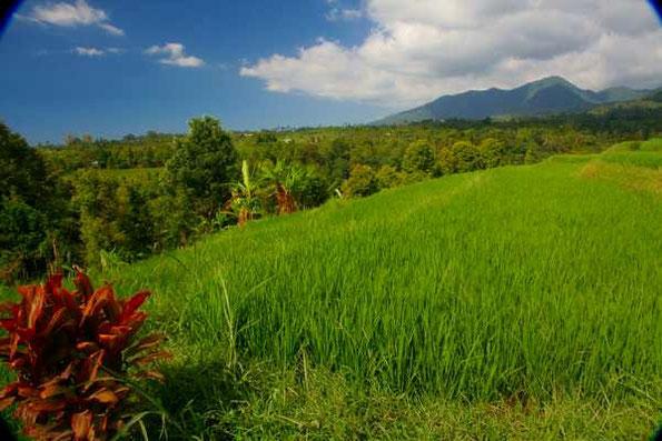 Blick von Reisterrassen zur Nordküste