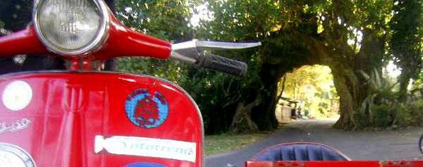 "vespa in front of a ""tree-bridge"""