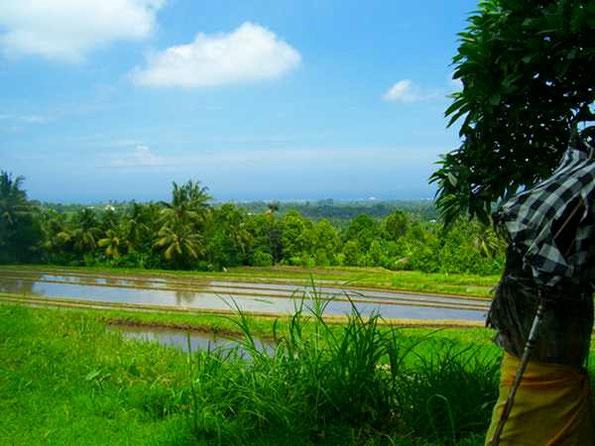 Tempelschirm vor Reisfeldern und Küstenlinie
