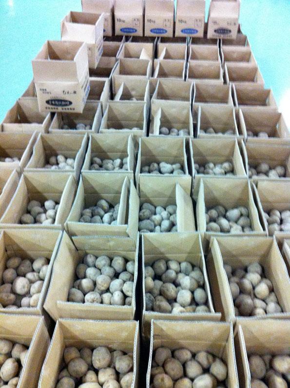 北海道 物産展 ジャガイモ キタアカリ