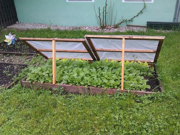 Jardinage potager Montpellier / Vergeze