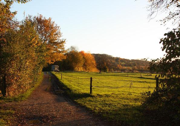 Herbstliche Abendsonne im Rebackerweg