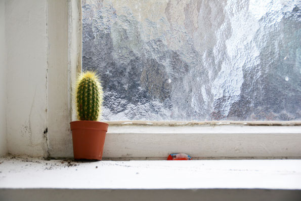 Gut gemeint...  Fenstergestaltung in der Düsseldorfer Kunstakademie.