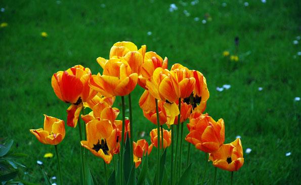 Frühlingsgrüße vom westlichen Nachbarn